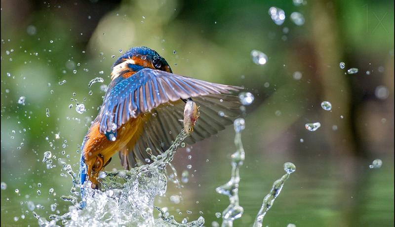 The magician - bird photography - nature photography