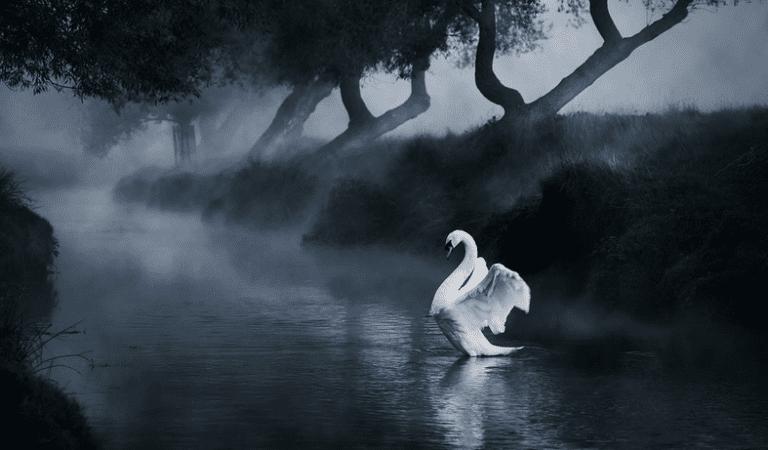 Beautiful Birds Photography – 20 Photos of Birds Taken At Amazing Places