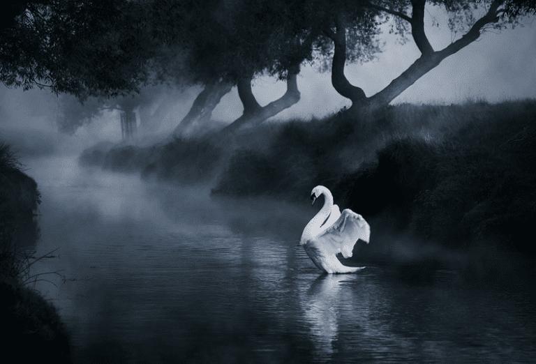 angel - bird photography
