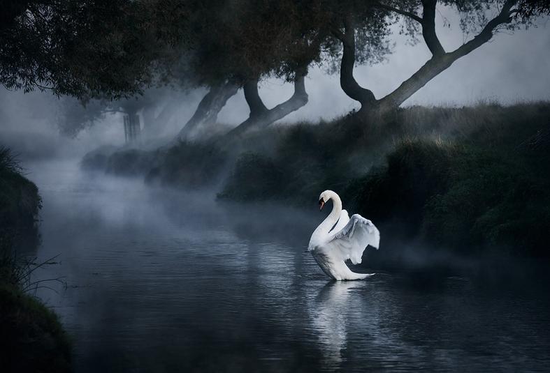 angel - bird photography - nature photography