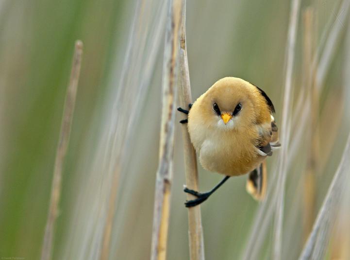angrybird - bird photography - nature photography