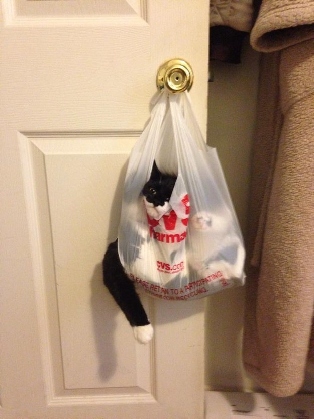 cat in a bag  funny cat pics amazinganimalphotosdotcom