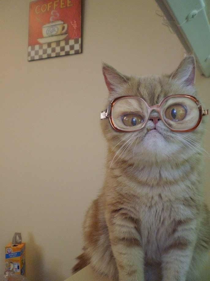 cat in big glasses funny cat pics 20 cat photos of things you should mind your cats doing cute