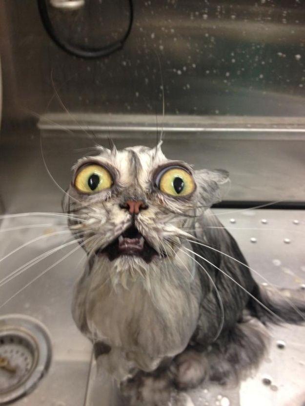 cat receiving horror newsfunny cat pics amazinganimalphotosdotcom