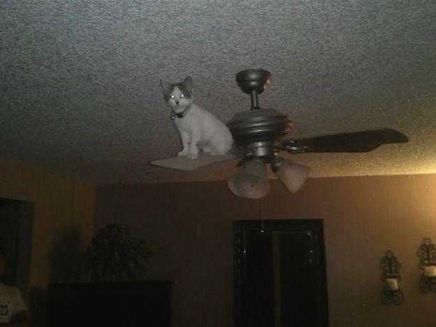 cat stuck on ceiling fan funny cat pics amazinganimalphotosdotcom