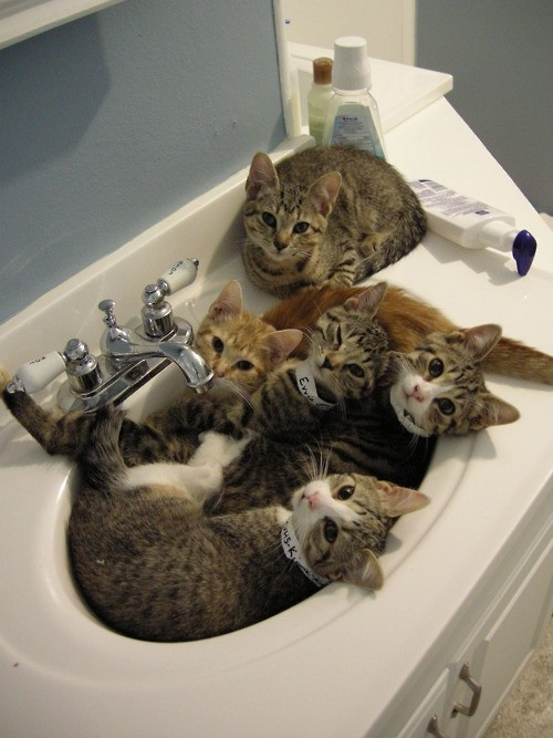 cats in the sink  funny cat pics