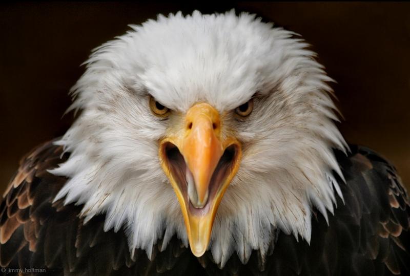 fierce - bird photography - nature photography