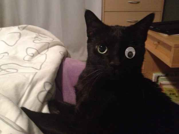 Cat With One Eye And Googly Eye