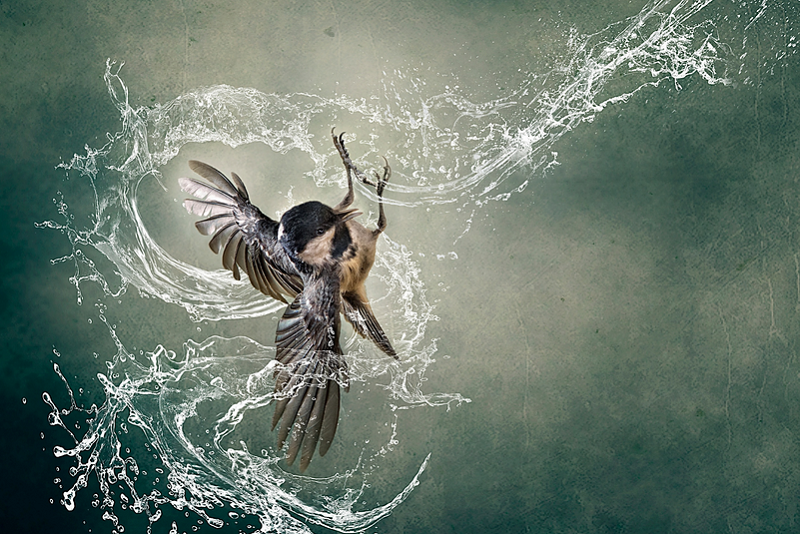 splash - bird photography - nature photography