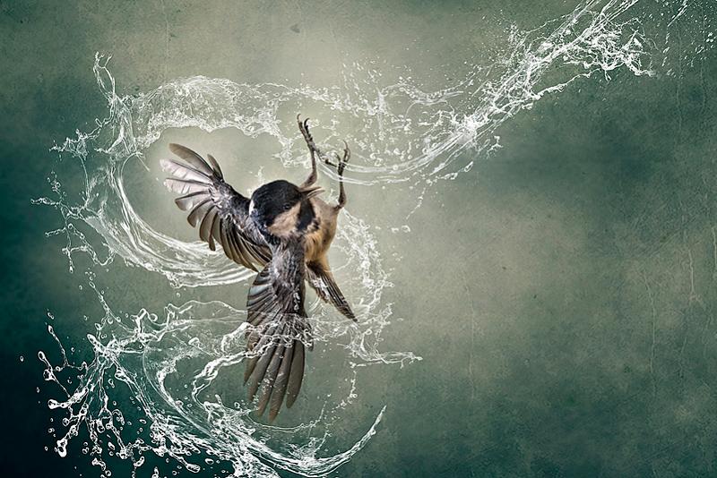 splash - bird photography - nature photography