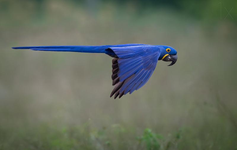 suspended - bird photography - nature photography