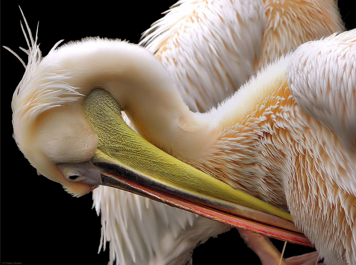 toileting - bird photography - nature photography