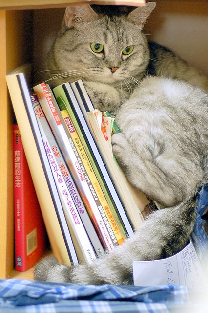 cat hiding in books 2- photos of cat trying to hide