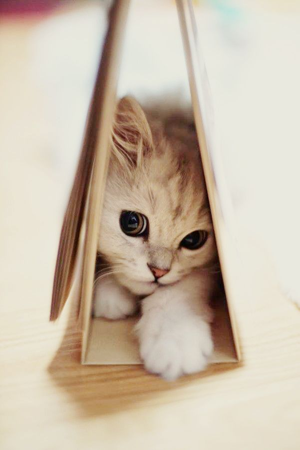 cat hiding in books -  photos of cat trying to hide