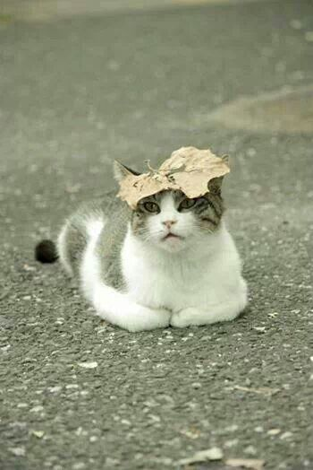 cat hiding under a leaf - photos of cat trying to hide