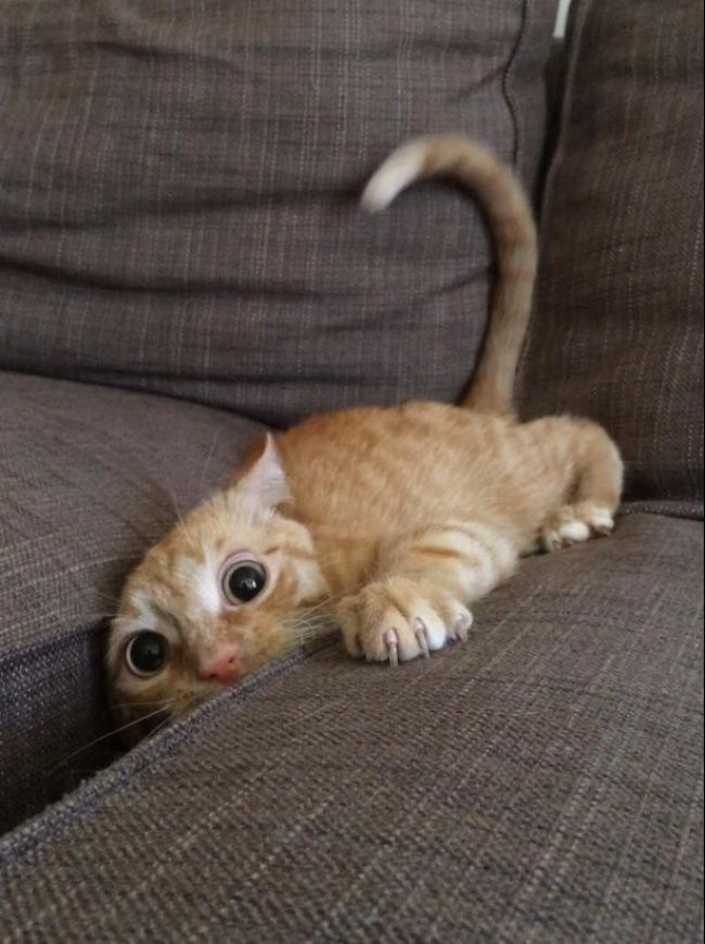 cat stuck hiding in sofa cushions - photos of cat trying to hide