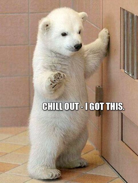 You Got It Animal Meme 25 Funny Animal Memes ...