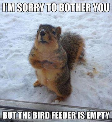 cute squirrel memes