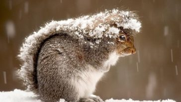 cute squirrel photography - hurry up i am caught in snow
