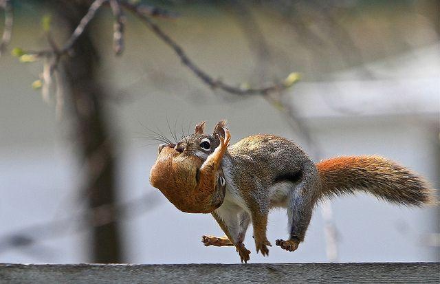 cute squirrel photography -    run