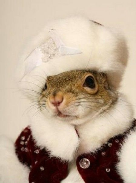 cute squirrel photography -     so whats up -  his highness squirreling