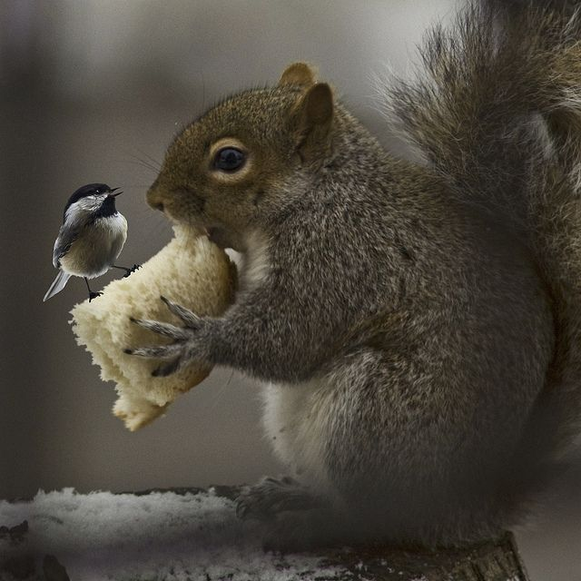 cute squirrel photography -     so whats up - not my food