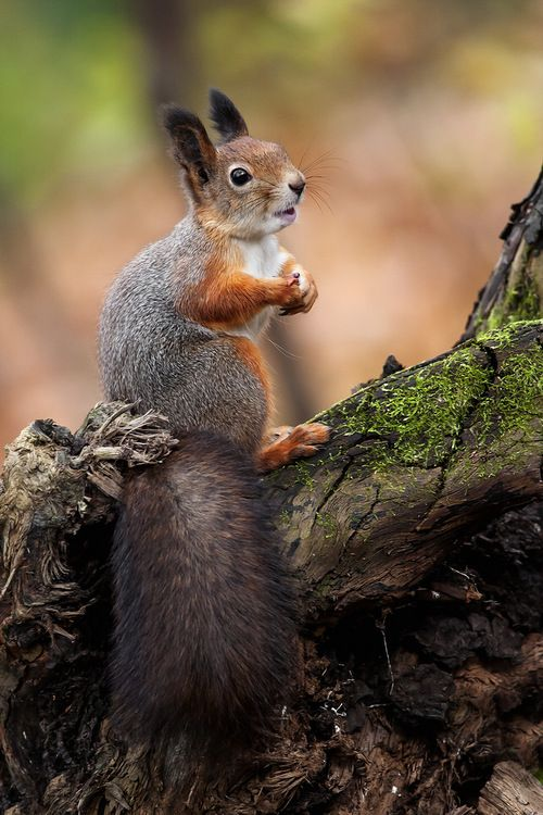 cute squirrel photography -     so whats up -  so you promise