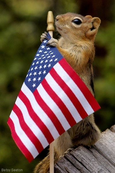 cute squirrel photography -- very patriotic