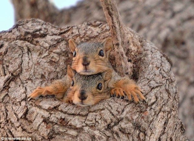 cute squirrel photography - what do you say can we make it