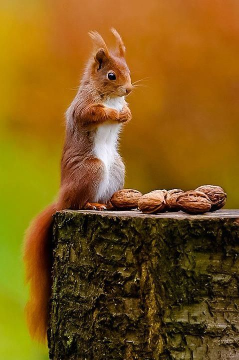 cute squirrel photography - which one first