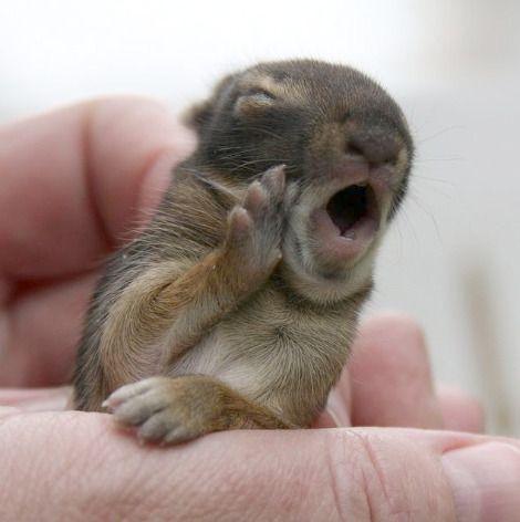 cute squirrel photography -  yawn
