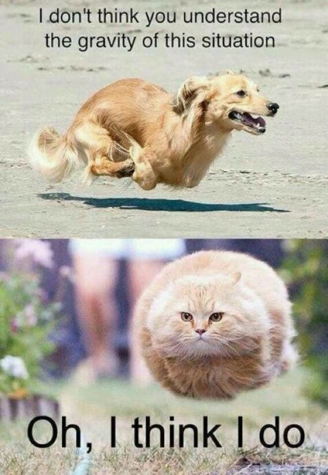 funny cat and animal nenes