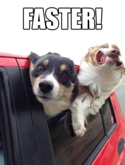 funny dogs memes