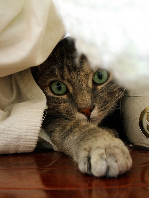 hi there smile - photos of cats trying to hide