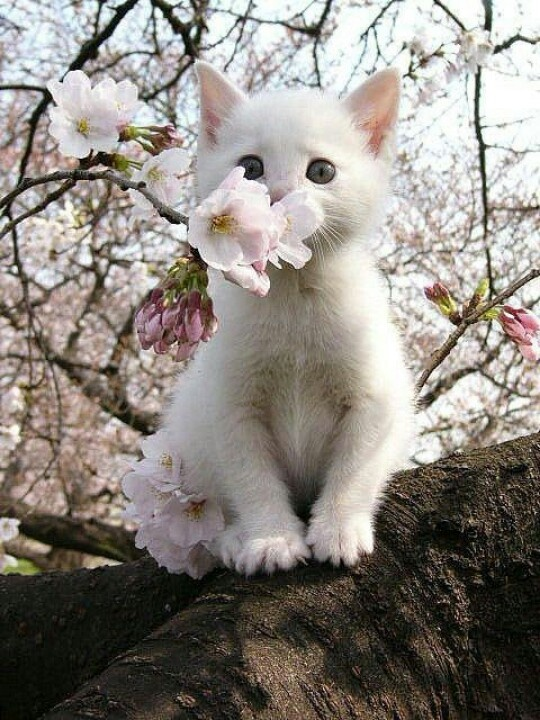 cat as a blossom