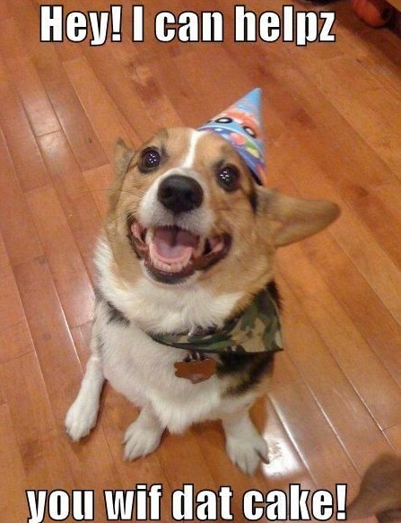 i can help funny cute dog