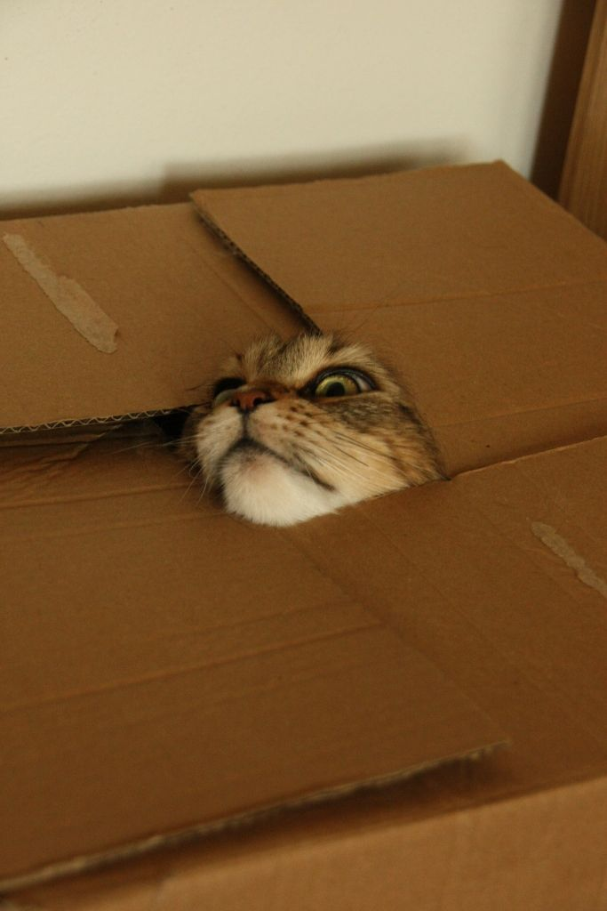 oh no i am choking help - photos of cat trying to hide