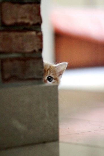 peekaboo - photos of cat trying to hide