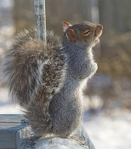 sing your heart out - cute squirrel photos