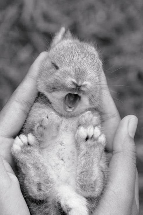 sleepy bunny cute animals yawning photos