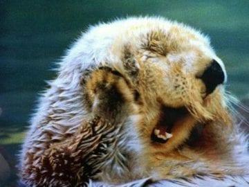 sleepy yawny otter cute animals yawning photos