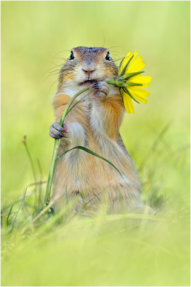 squirrel photos cute - but but i brought you a flower