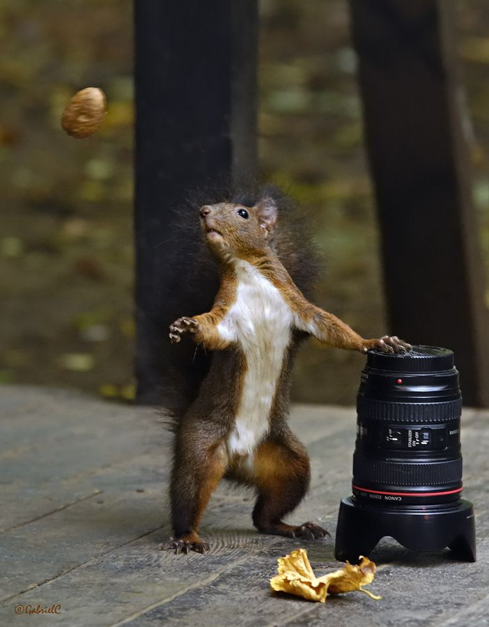 wait let me catch it first- cute squirrel photos