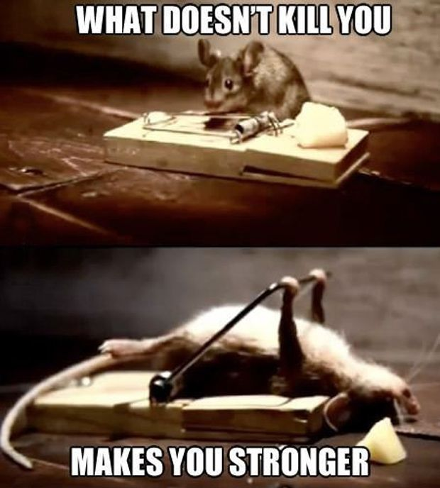 what doesnt kill you - funny mouse meme