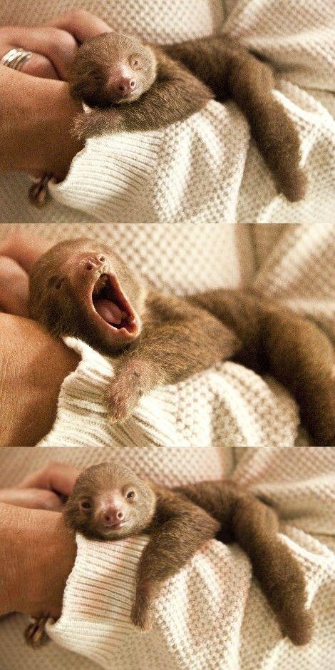 yawning sloth cute animals yawning photos
