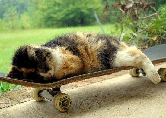 cat asleep on skateboard