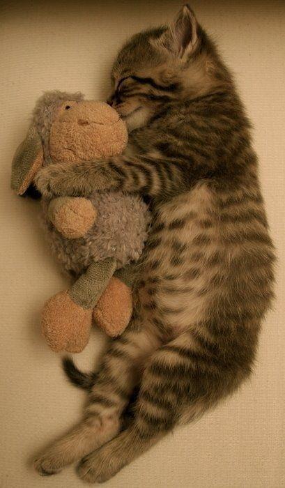 cat asleep peacefully - cute cats sleeping photos
