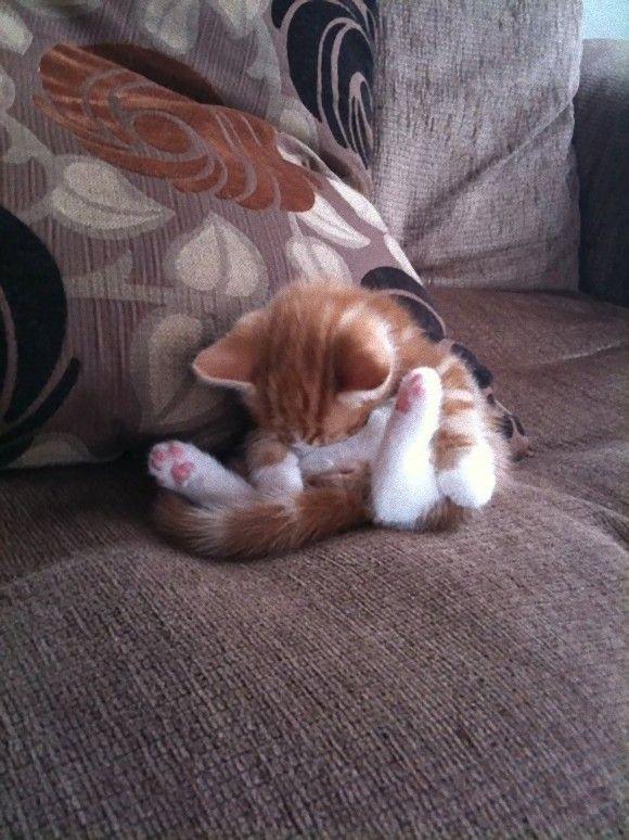 cat on sofa cute - cute cats sleeping photos