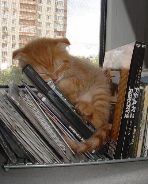 20 Irresistably Cute Photos of Cats Sleeping