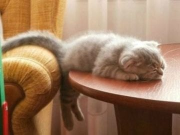 cat sleeping on table - cute cats sleeping photos